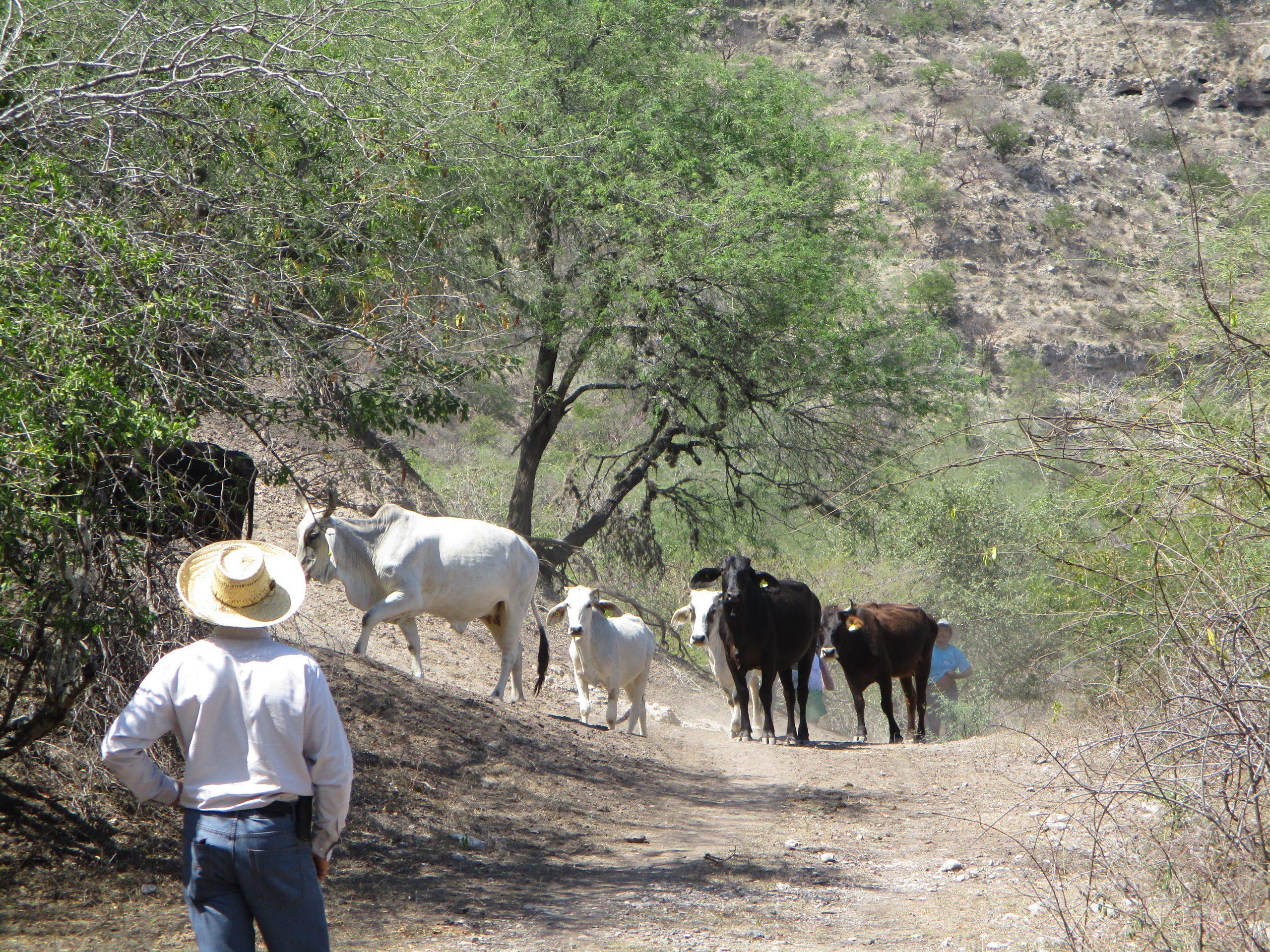 Paisaje ganadero de Jalisco, México ©BioPaSOS.