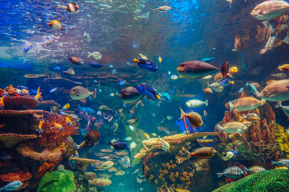 Coastal Biodiversity | IUCN